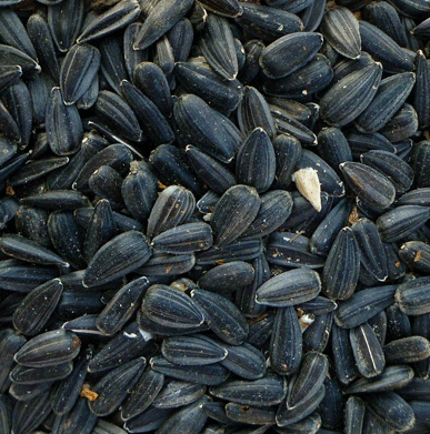Organic Sunflower Seed