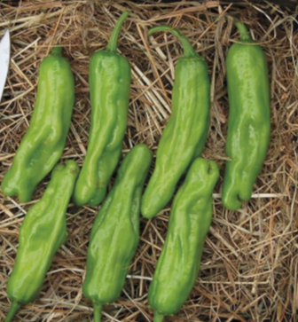 Shishito Sweet Pepper Seeds