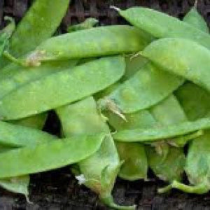 Mammoth Melting Snow Pea Seeds