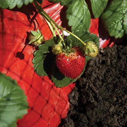 Red Mulch For Tomatoes Strawberries And Peppers Ali S