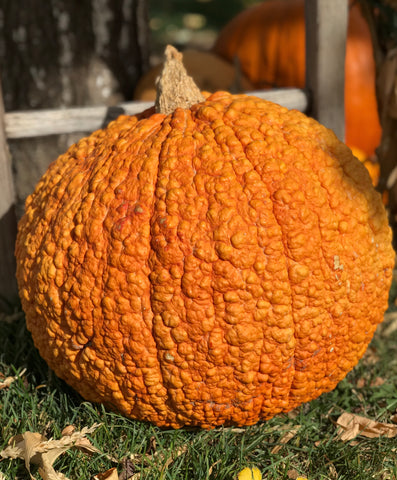 Red Warty Thing Pumpkin/Squash Seeds