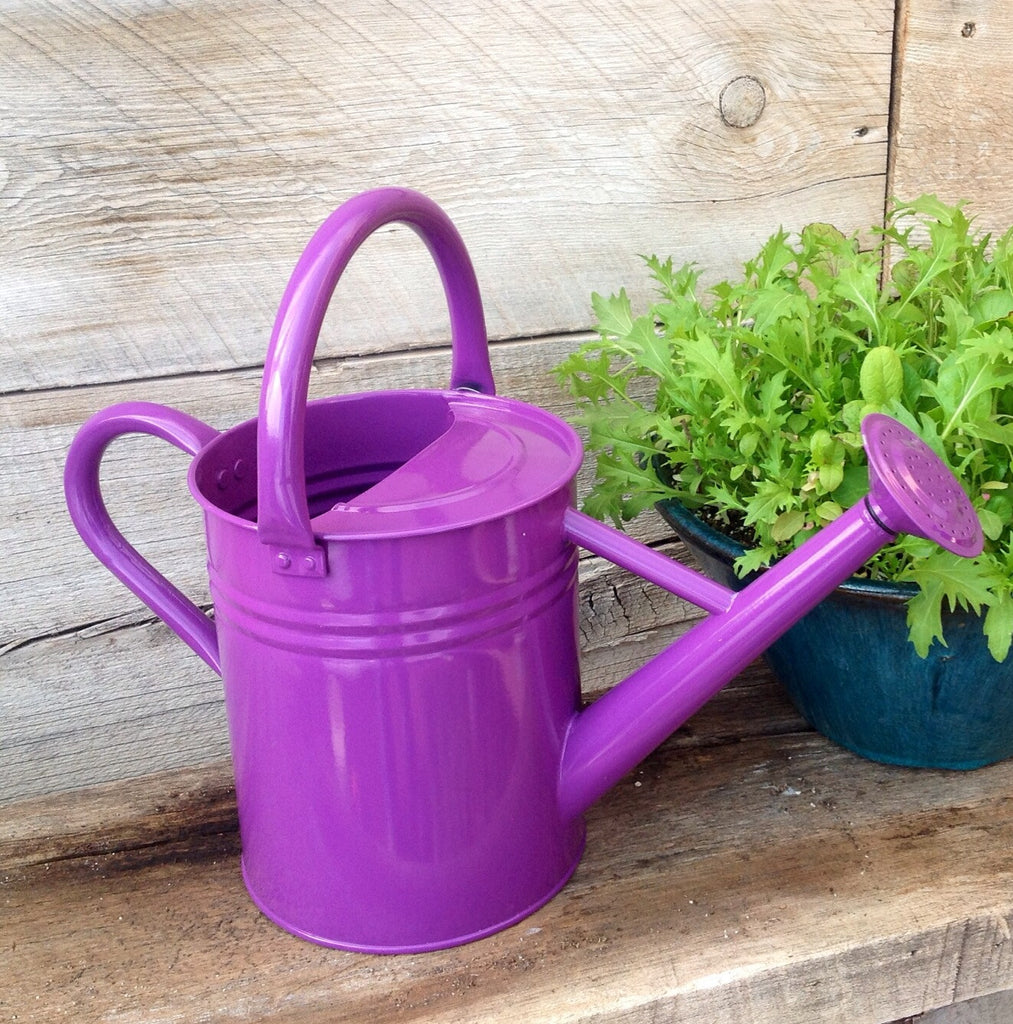 Watering Can 1 Gallon