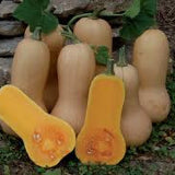 Waltham Butternut Winter Squash Seeds