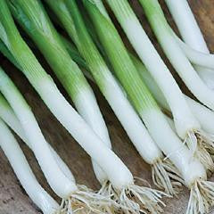 Parade Bunching Onion