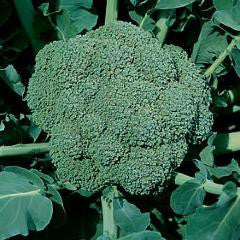 Waltham Broccoli Seeds