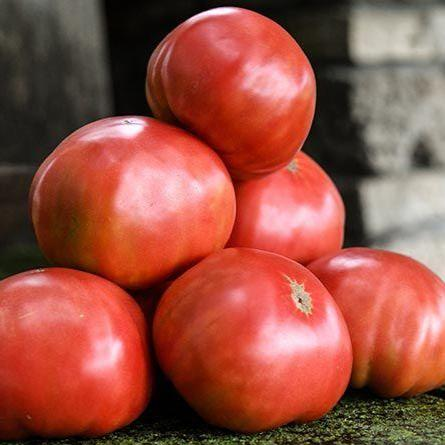 Mortgage Lifter Tomato Heirloom Seeds