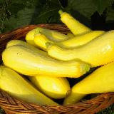 Sucess Yellow Straightneck Squash Seeds