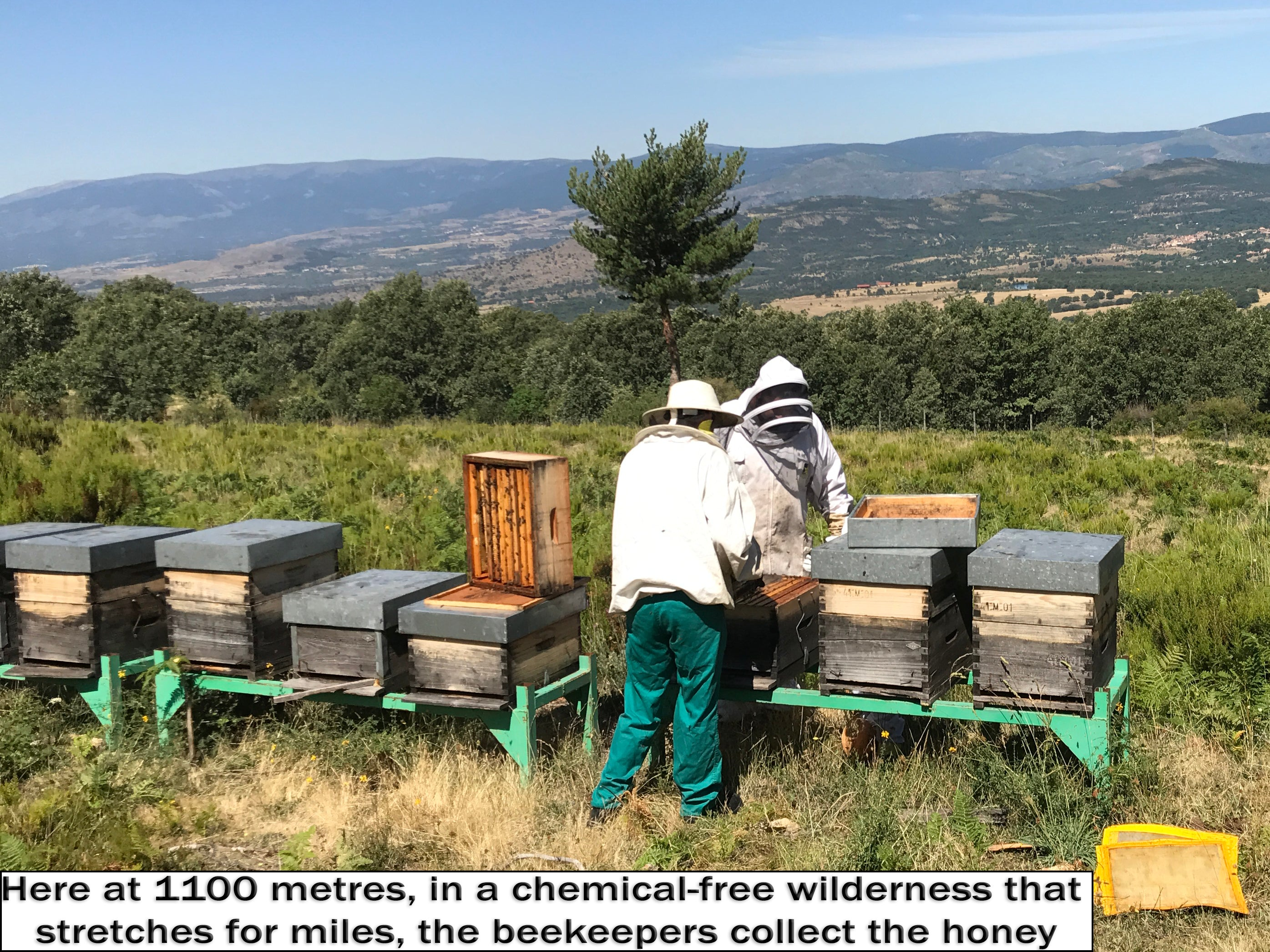 Antonio and Ruben check the hives in the Sierra del Rincón, Biosphere Reserve