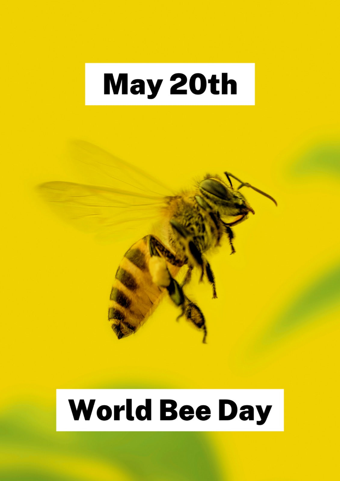 Photo of bee for World Bee Day