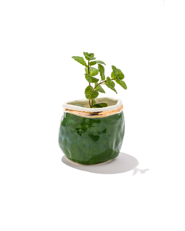 Evergreen Seedling Planter