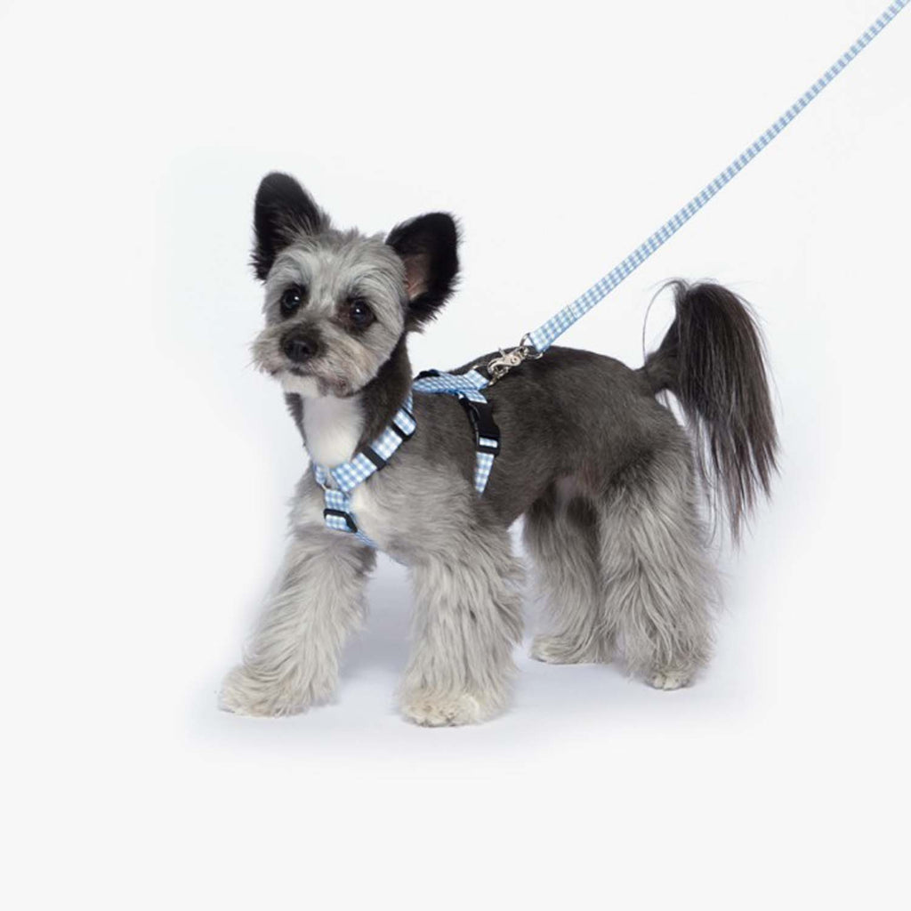 Woof by Betters Barrels H Harness (Check Blue)