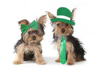 Pet Perennials wishes you all a safe and quiet St. Patrick's Day this year. Hug a furbaby!