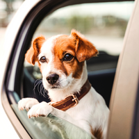 Traveling With Pet Tips for Insurance and Keeping Safe