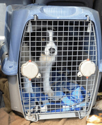 A Trainer's Truth About Crates - Modern Dog Magazine - Written by Jennifer Messer