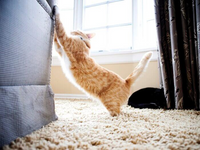 Cats and Furniture - Why they scratch