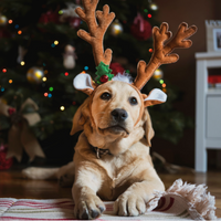 Dad Dog Dressing Pets for the Holidays