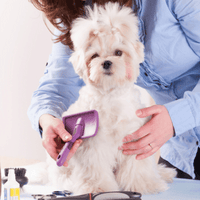 Dog Groomer brushing coat of dog, Groomsoft Grooming Software