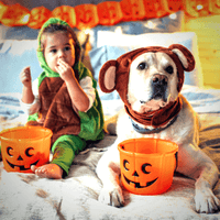 Pet Safety this Howl-oween