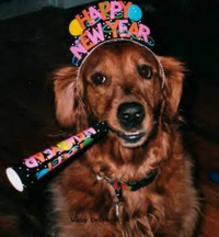 How to Have a Safe, Fun New Year's Eve with Pets - Guest Share by Wendy Wilson - Chewy.com
