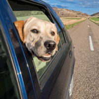 A Dad and His Dog: Hitting the Road Responsibily