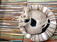 Jessica Brody Two Cats in Cat bed