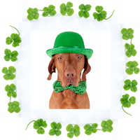 Pet Perennials Dad Dog Blog Post for St Patrick's Day 2021
