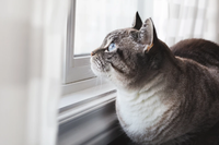 The Aging Process of Cats And How to Take Care of Them - Guest blog courtesy of PetBucket