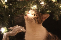 Coping with Pet Loss and Grief During the Holidays - Guest Blog by The Conscious Cat