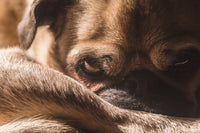 What Your Dog's Behaviour Can Tell You About Pain by Sara Alan Smith