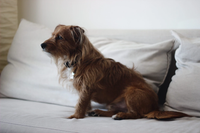 Banish Bad Behaviors and Live Harmoniously with Your Pet - Guest Blog by Tyler Evans