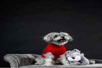 The Fetch Guide on Caring for an Aging Pet - Guest blog by Barry Nyhan