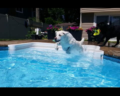 Dexter Ward Leaping into Paradise for a Swim