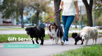 Image of A Pet Sitter or Dog Walker with Dogs and that Uses Business Gift Service to send Pet sympathy packages to clients