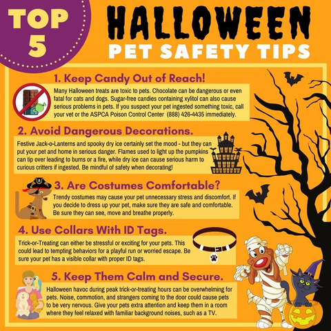 Tips Infographic Halloween Pet Safety