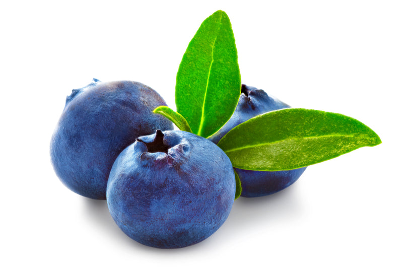 6 Remarkable Reasons Why Blueberries are the Ultimate Fruit