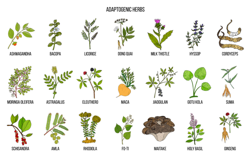 Adaptogens - Increase Your Resistance to Stress and Improve Your Health