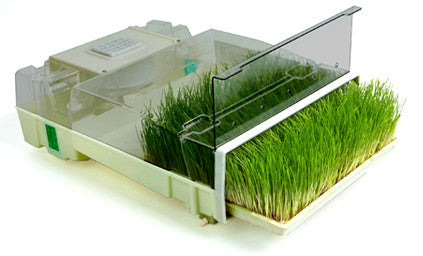 EasyGreen Single Tray Sprouter & Wheatgrass System