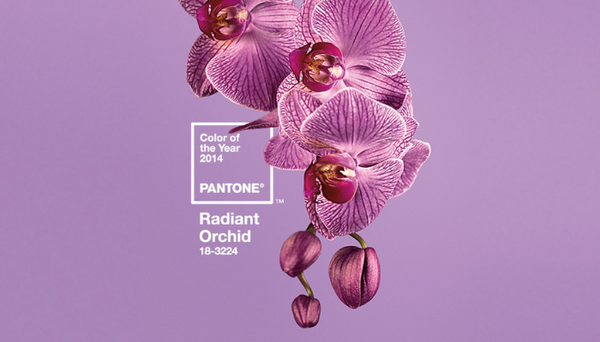 Pantone Colour of the Year - Radiant Orchid