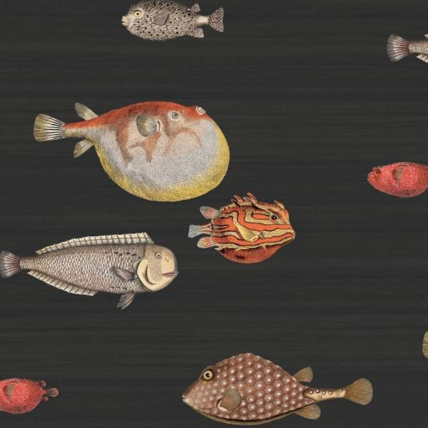 Cole and Son Soot Acquario Wallpaper Roll Cole and Son Fornasetti Acquario Wallpaper 5 Colours