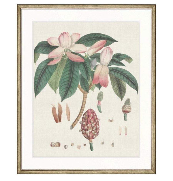 Designer Boys Wallich Botanical IV Gold Frame Wallich Botanical IV Print In Stock