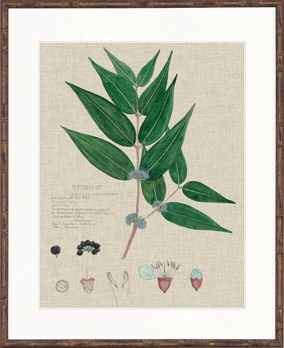 Designer Boys Collections Painting Herbarium Print II
