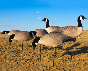 EVAC Fullbody Canada Goose Decoy White Rock Decoys