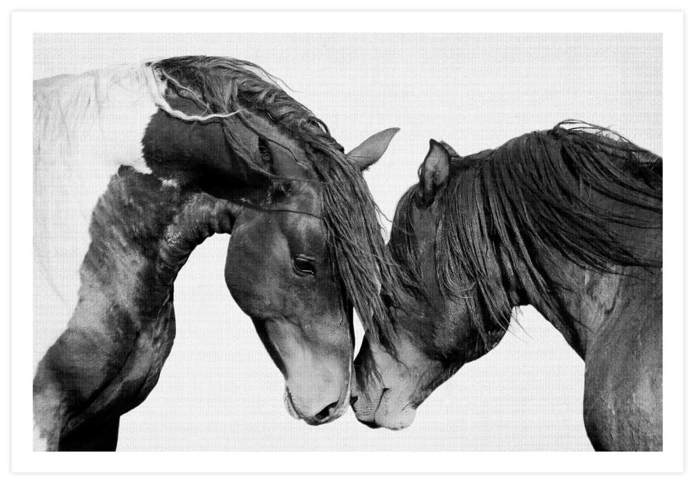 intimate-horses-lila-and-lola-P1_RHNLLW11SOIT.jpg