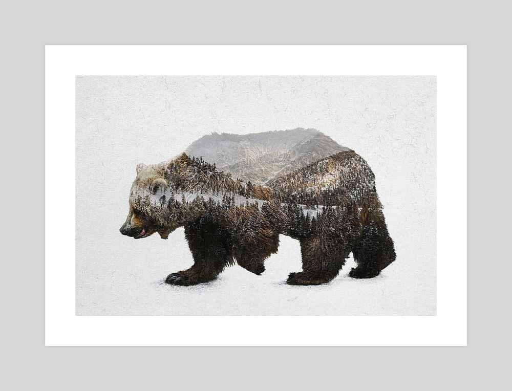 kodiak-brown-bear-david-iwane-grey-wall_RU6HFP1ZJ37D.jpg