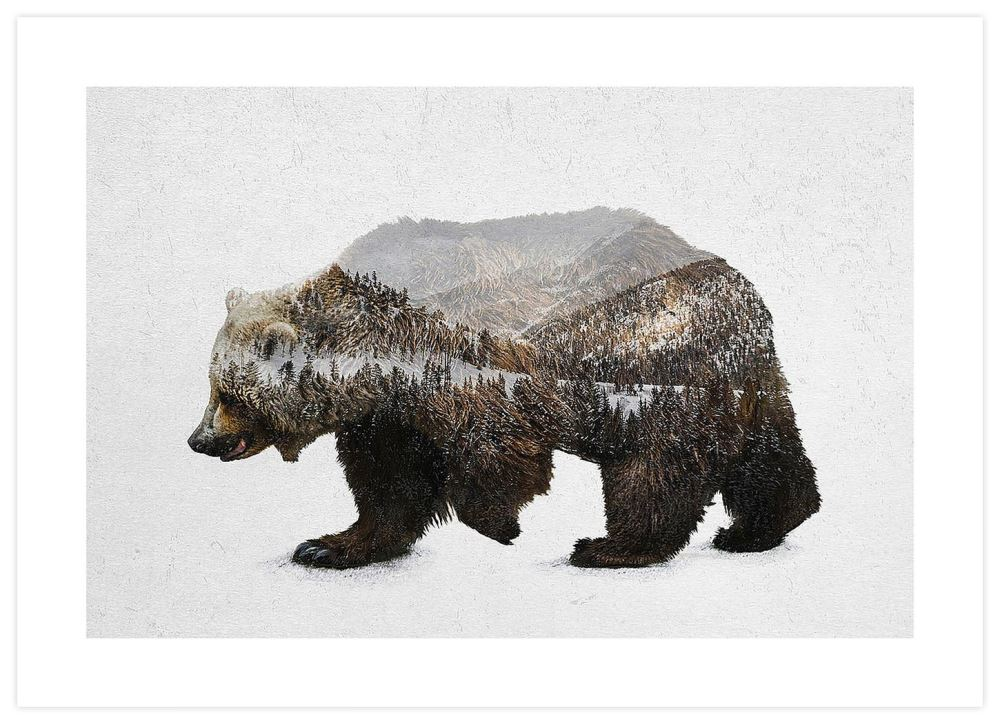 kodiak-brown-bear-david-iwane-p1_RU6HFSG7L4GA.jpg