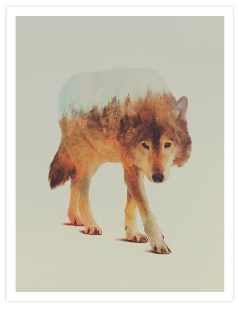 wolf-in-the-woods-andreas-lie-product-image_R8E47LVAIIPJ.jpg
