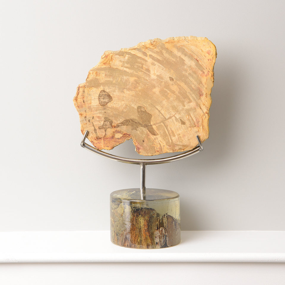 Petrified Teak Decorative Piece with Resin Base