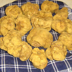 White Truffle Magnatum Pico (Price is per Kg)