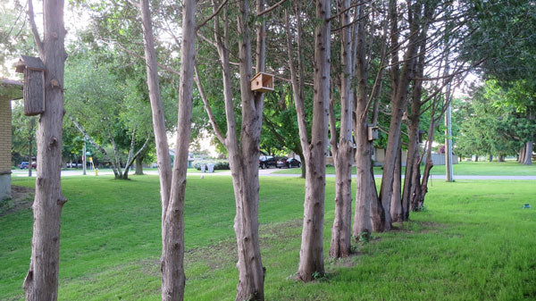birdhouses hanging in trees