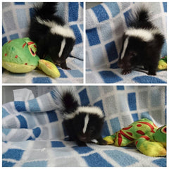 baby skunk with stuffed fish